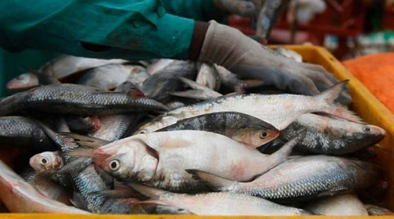 kolkata-fish-market-2