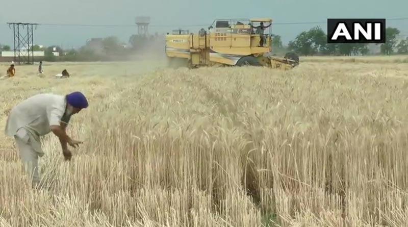 Punjab-field