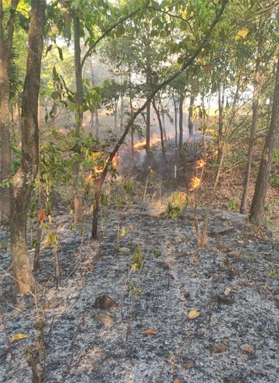 Purulia-forest-2