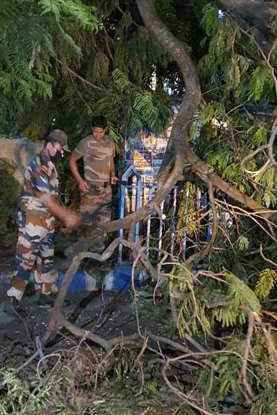 Army-cuts-tree