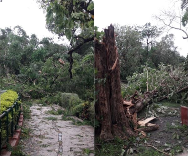 Breaking: An ancient tree collapses near cage, Alipore zoo animals rescued