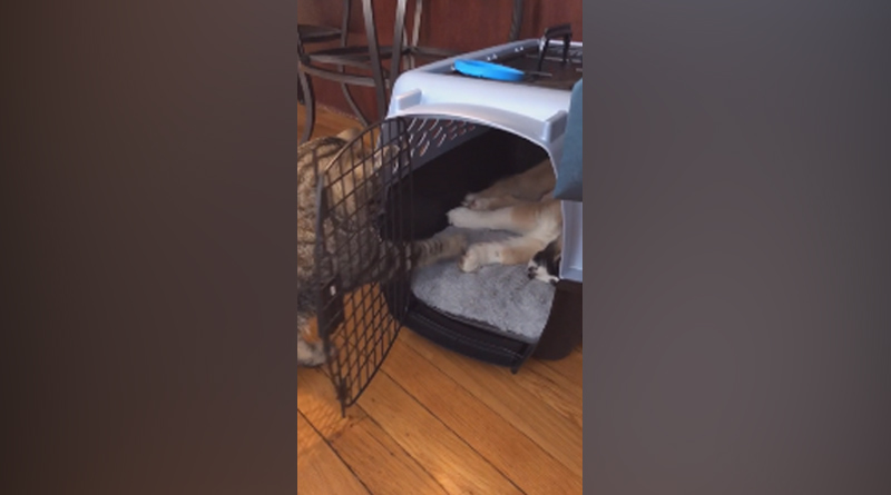 This cat trying to wake up the puppy is the cutest thing on the internet