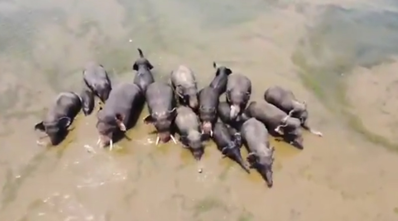 This viral video of an elephant family bathing in a river will make you smile