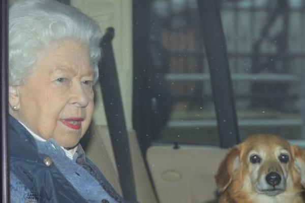 Queen-Elizabeth-pets