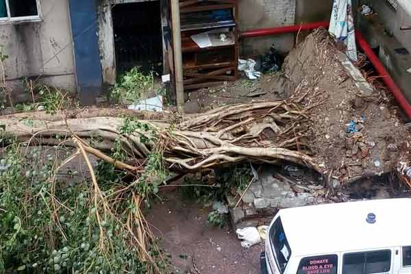 Breaking: Doctors save tree uprooted during cyclone Amphan