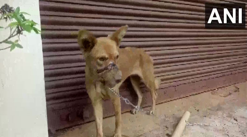 Dog with its mouth sealed by tape for 2 weeks rescued in Kerala