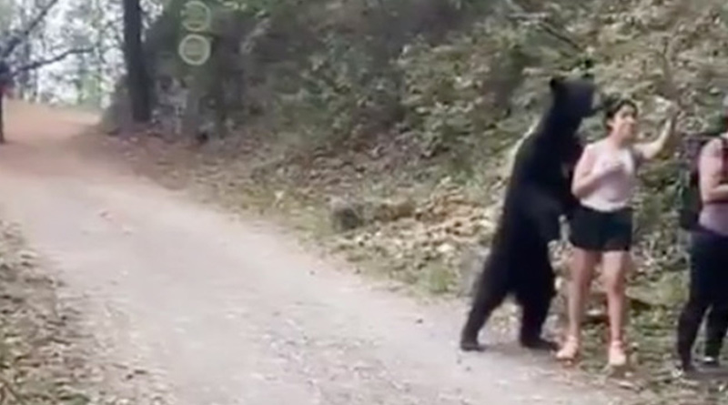 Bear Poses For Selfie With A Girl, Netizens Stunned At Girl's Bravery