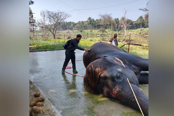 Elephant-Hair-style-2