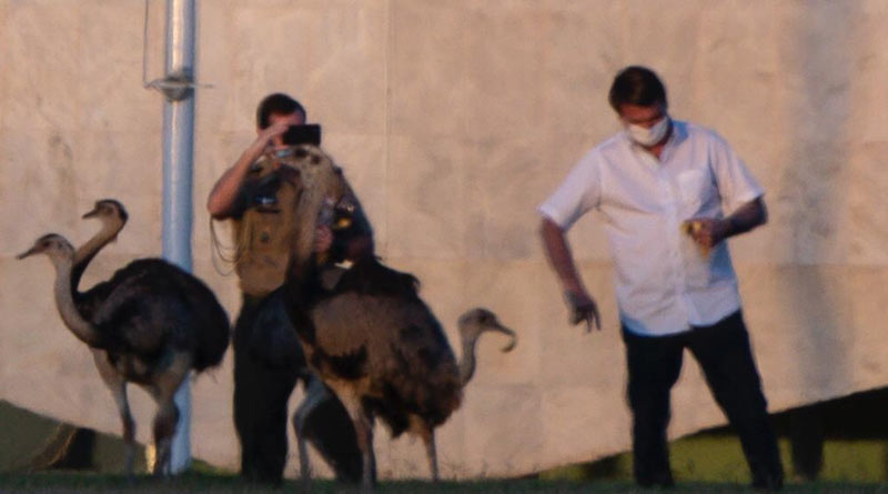 Ostrich like bird bites Brazil President Bolsonaro who is COVID positive
