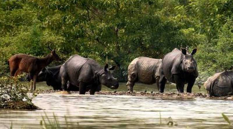 'Largest' 32-km artificial highland to be built in Kaziranga National Park