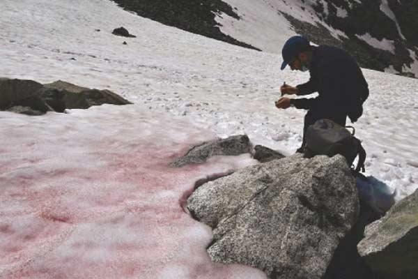 Pink-ice1