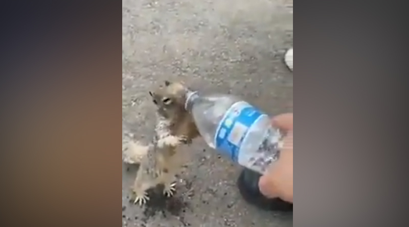 Viral Video Of Thirsty Squirrel Asking For Water Melts Hearts