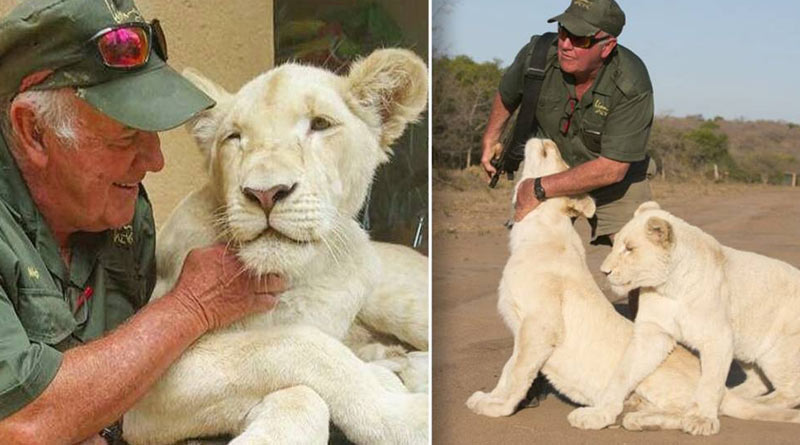 Conservationist killed by two lions whom he took care for long time