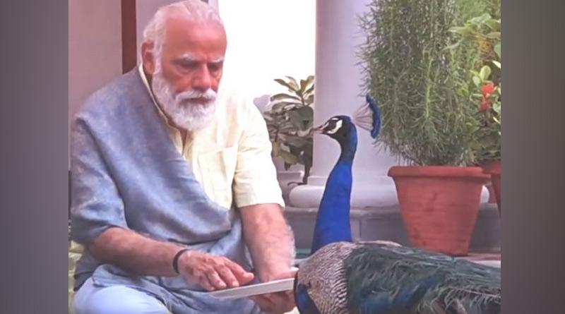 Narendra Modi shares video of 'precious moments' feeding peacocks