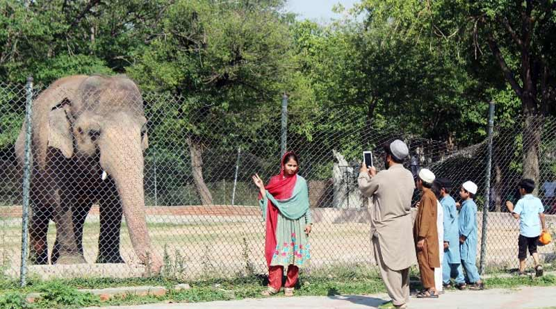 Around 500 animals go 'missing' from zoo in Pakistan