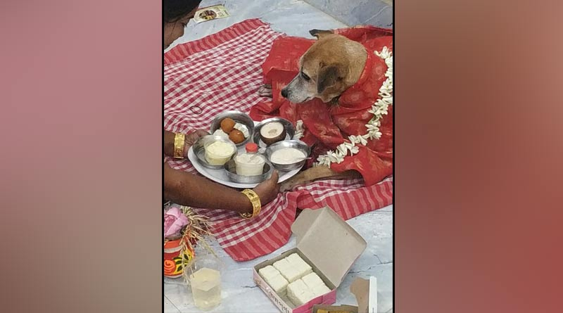 Kolkata News: Lady worship dog as goddess laxmi in Saltlake । Sangbad Pratidin