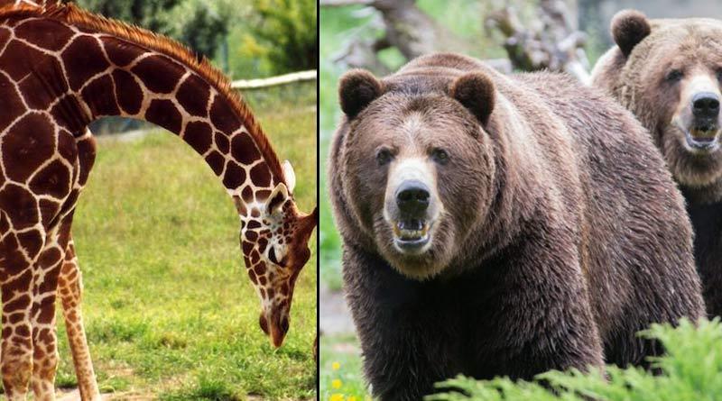 COVID-19: Funding crisis threatens zoos' conservation work in UK, Australia  Sangbad Pratidin
