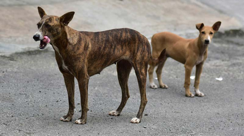 Kolkata news; Deputy super of Rampurhat medical collage complain against a street dog murderer   Sangbad Pratidin
