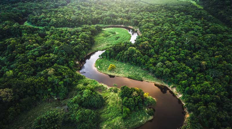 The most trees have been cut down in the Amazon during the Bolsonero era, according to statistics