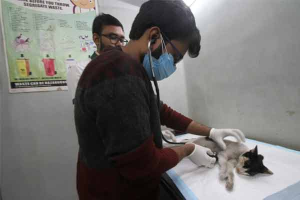 A blood data bank set up for pets in Kolkata