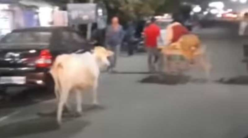 Mother cow runs after injured calf being taken to veterinary hospital in Odisha, heartwarming video goes viral | Sangbad Pratidin