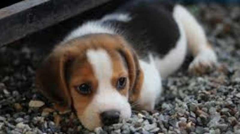 Three month old puppy beheaded in Mumbai's Dahisar, FIR lodged   Sangbad Pratidin