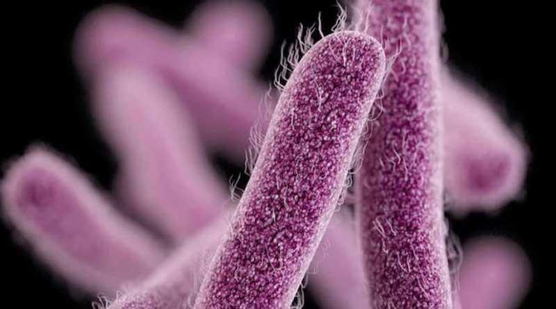 After Kozhikode, a case of Shigella disease found in Ernakulam, Kerala | Sangbad Pratidin