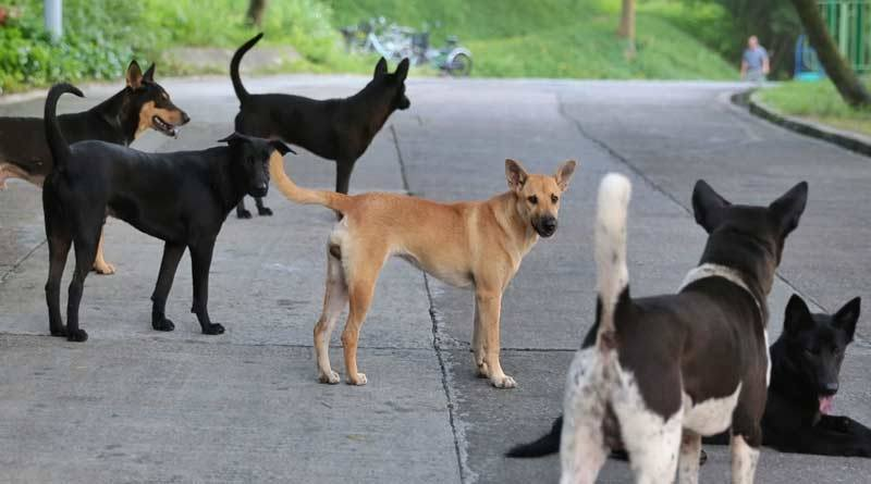 Dog beaten to death by a man in Raniganj । Sangbad Pratidin