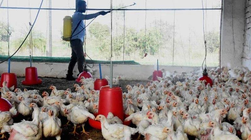 Health Department of Bengal alerts districts administration over Bird Flu | Sangbad Pratidin