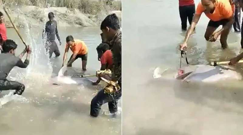 Rare Gangetic dolphin hacked to death by locals in UP's Pratapgarh, video goes viral | Sangbad Pratidin
