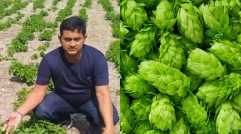 Bihar farmer grows 'Hop Shoots' that sell for Rs 85k a Kg, IAS officer calls it 'game changer' | Sangbad Pratidin
