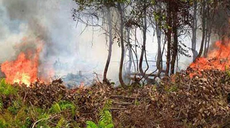 Wild fire at mangrove forest in Bangladesh since two days | Sangbad Pratidin