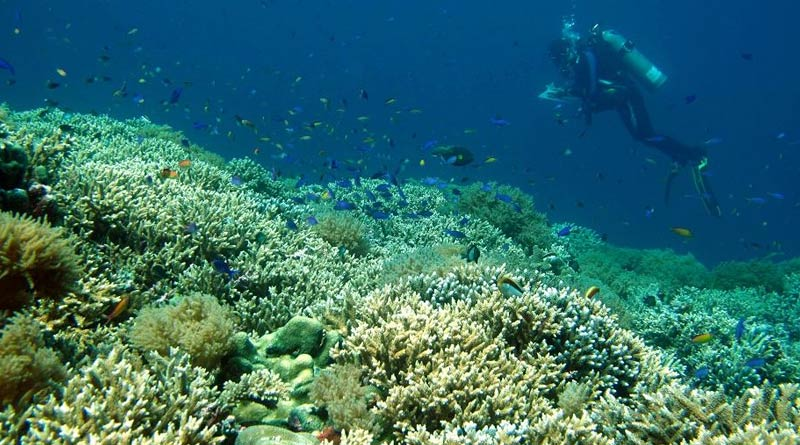 New coral reef restoration technology will be used to reverse from damage | Sangbad Pratidin