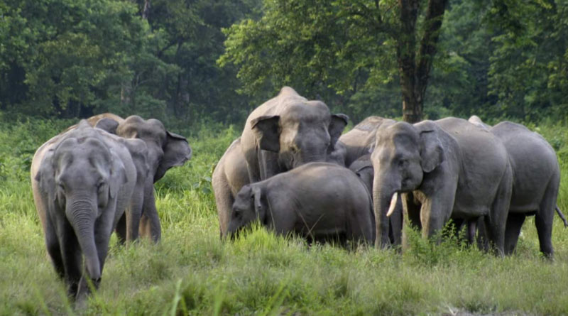 18 Elephants Killed In Lightning Strike In Assam | Sangbad Pratidin