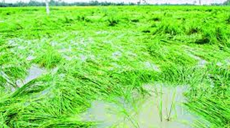 East Burdwan's farmers faces loss at least 125 crore due to Cyclone Yaas | Sangbad Pratidin