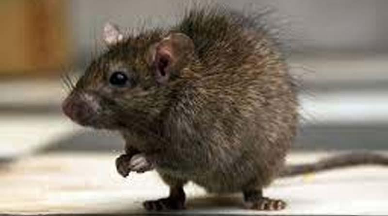 Rats nibble away parts of baby's foot In Madhya Pradesh Govt run Hospital| Sangbad Pratidin
