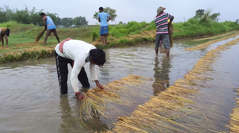 Huge loss in agriculture due to storm and rain | Sangbad Pratidin