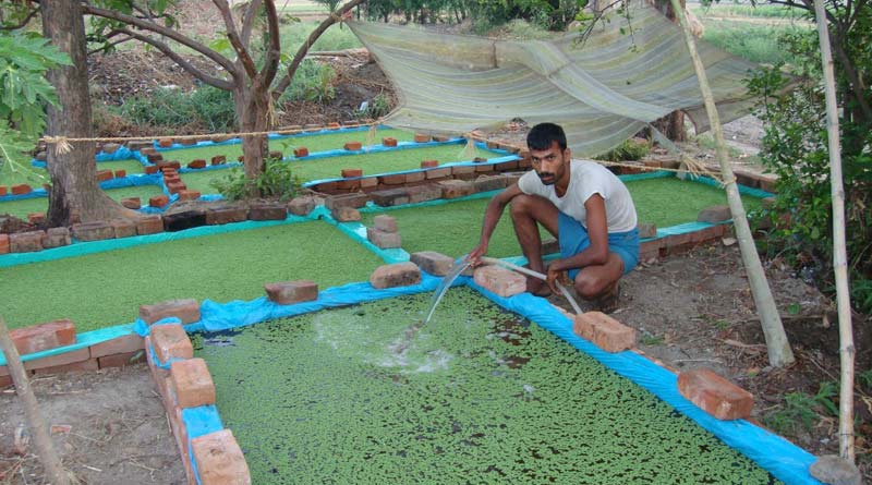 ARD minister Swapan Debnath emphasises on Azolla production for nutrition of animals | Sangbad Pratidin