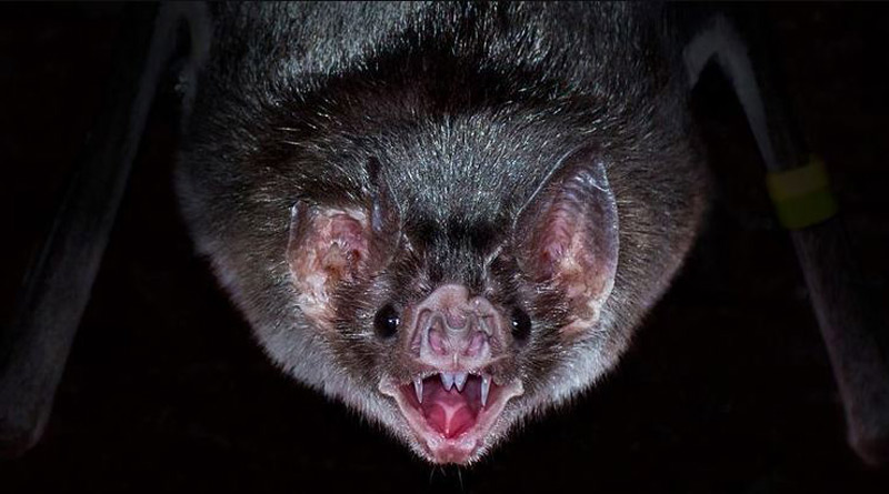 New coronaviruses found in bats amid renewed calls to probe Covid-19 origins | Sangbad Pratidin