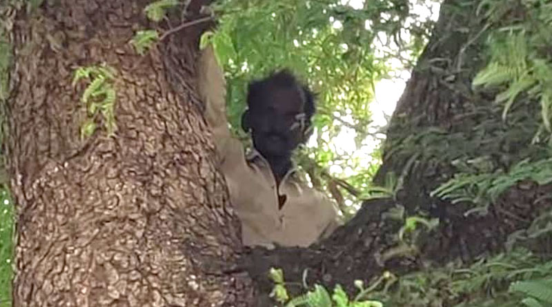 Man climbs tree with wife's Aadhar card to avoid getting Covid vaccine in MP village   Sangbad Pratidin
