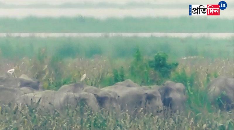 Elephants mourn death of calf at Jalpaiguri, forest rangers rescued the deadbody | Sangbad Pratidin