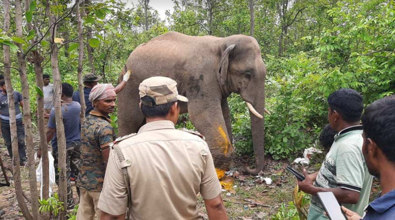 Bankura Forest department sets free a wild Elephant in Forest | Sangbad Pratidin