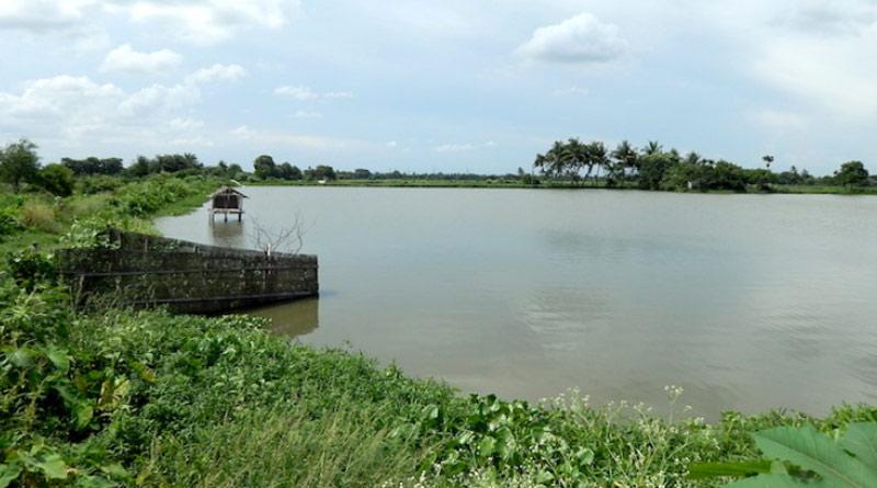To Save East Kolkata wetlands State Environment Department takes new Initiative | Sangbad Pratidin