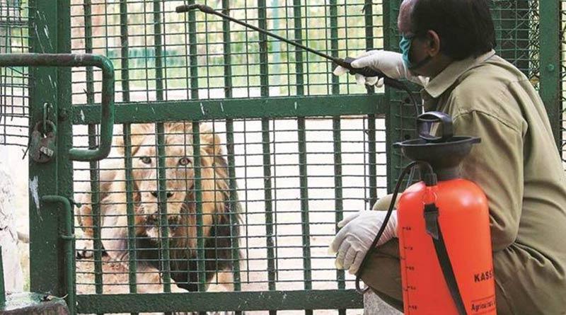 56 elephants in two camps undergo Covid test in Tamil Nadu | Sangbad Pratidin