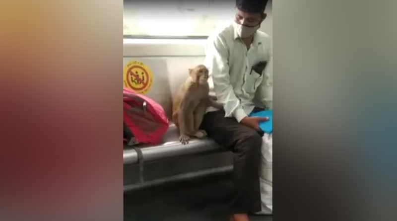 On Camera, Monkey Travels With Delhi Metro Commuters: