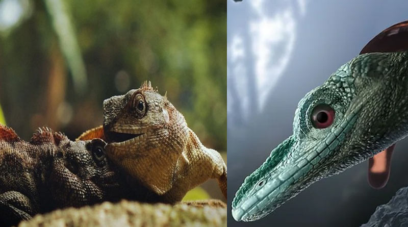 Misidentified as the smallest dinosaur, fossils from Myanmar is of Naga lizards, scientists claim | Sangbad Pratidin