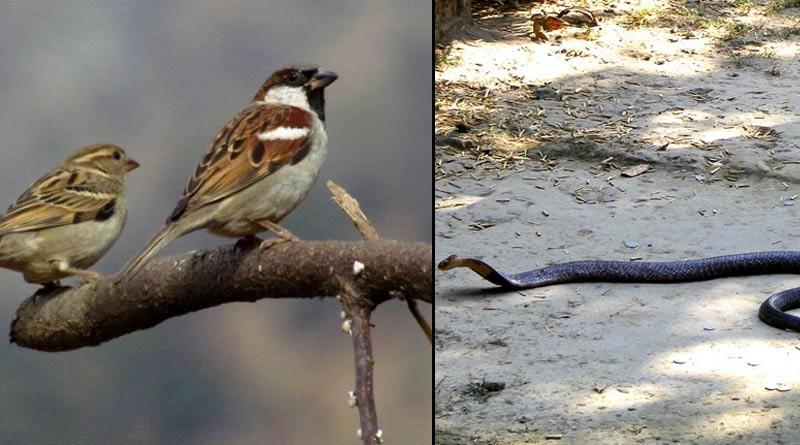 Kolkata parks witness increase in bird, serpent population | Sangbad Pratidin