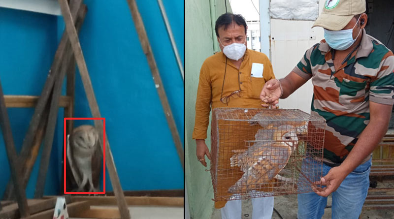 A wounded owl rescued from TMC Bhaban while reconstruction of the building | Sangbad Pratidin