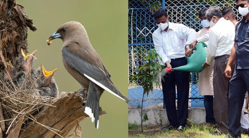 KMC planting trees to compensate the shortage of bird's food | Sangbad Pratidin