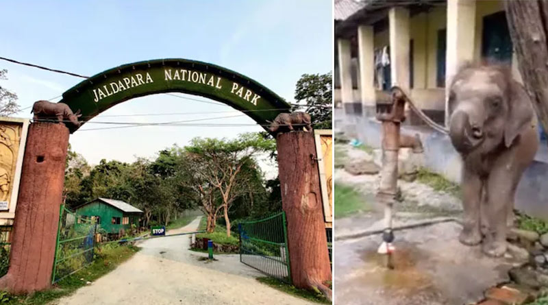 Baby elephant pumps tube well to drink water in viral video from Bengal's Jaldapara | Sangbad Pratidin